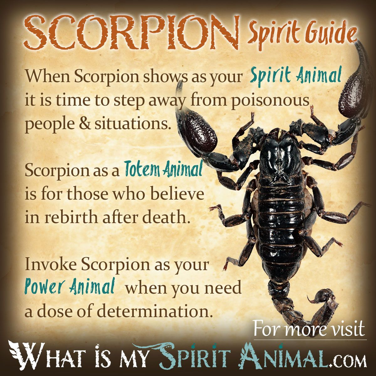 who is my spirit guide