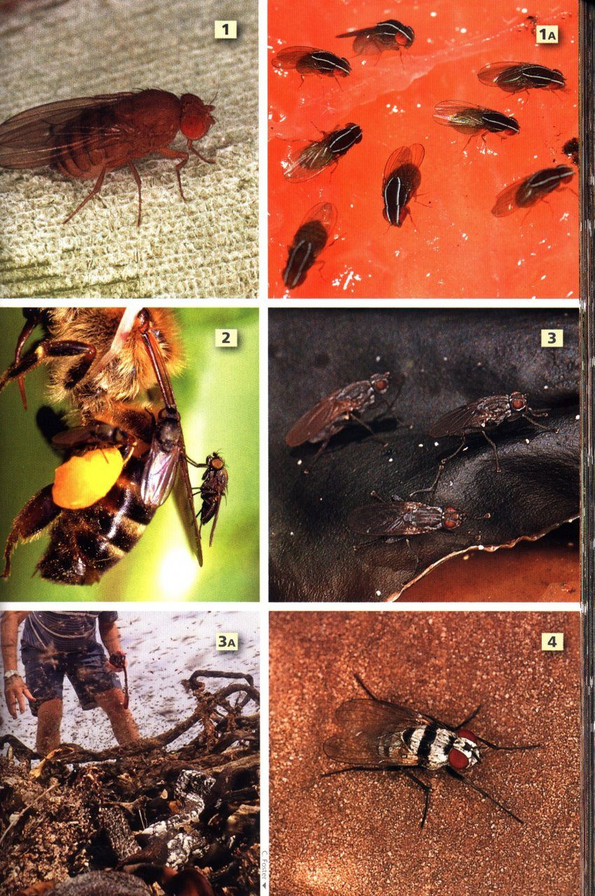 insects of south africa field guide