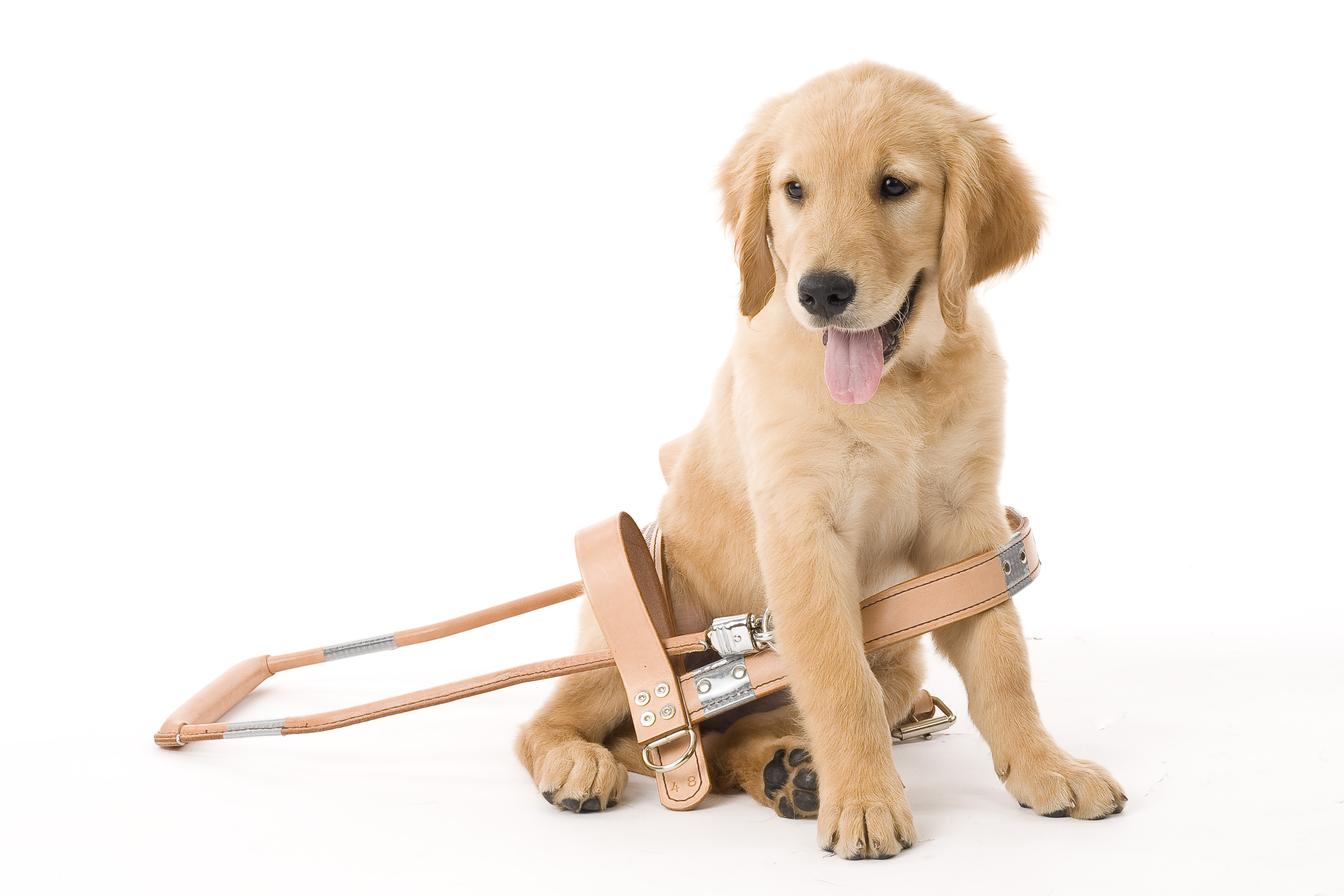 what are guide dogs for